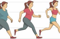 减肥的秘密:肌肉与基础代谢率