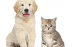 蓓迪芬——纯天然多功能宠物除臭喷雾你盘了吗?